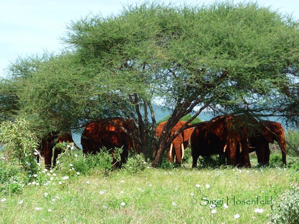 Elephants in Masai Mara