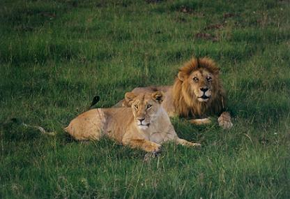 The big five animals like rhinos, leopards, lions, buffalo and ...