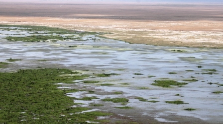 Amboseli National Park Swamp