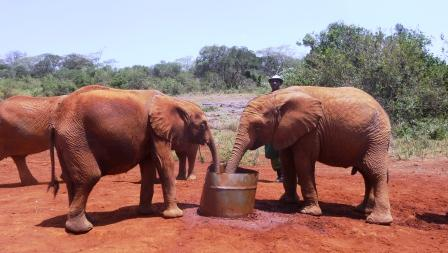 Elephant Babies at Trust having some water