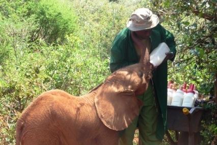 Elephant Baby Keeper