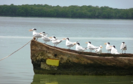Birds at Mida Creek