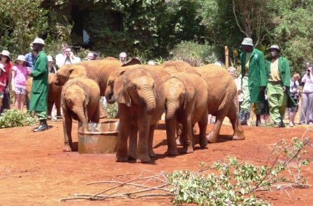 Elephant Babies at Trust