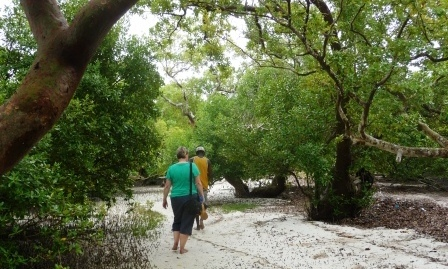 Mida Creek Walk