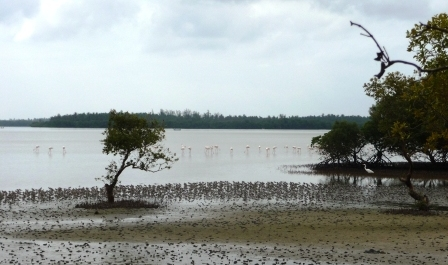 Mida Creek Mud Flats