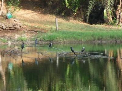 Birds at Forest Trails