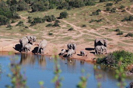 © Siggi Hosenfeld - Elephants at Lake