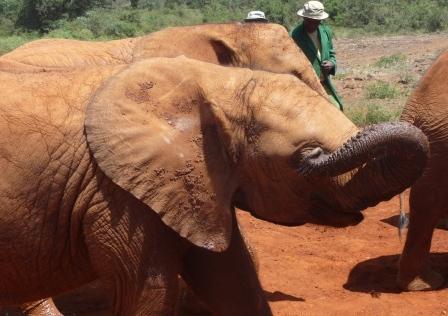 Elephant baby close up