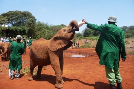 Elephant Babies gets bottle