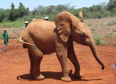 Elephant Baby being silly
