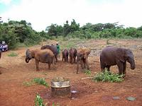 Elephants at David Sheldrick Wildlife