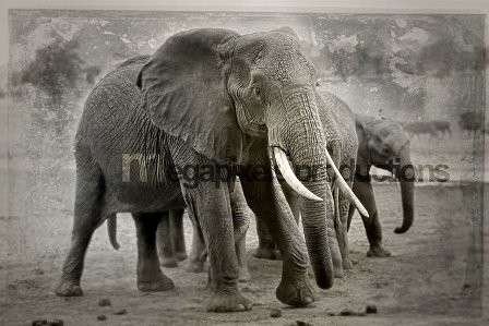 KK Art Elephant