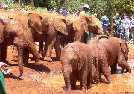 Elephant Baby having a mud bath