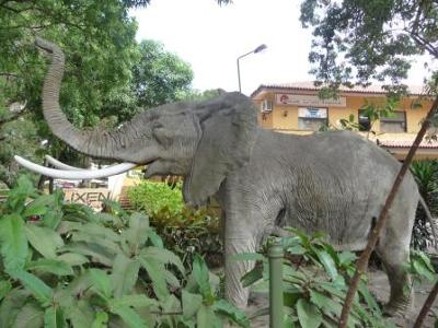 Elephant in front of Karen Blixen Cafe