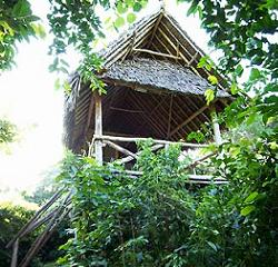 Stilts Eco Camp
