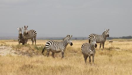 Zebra Group